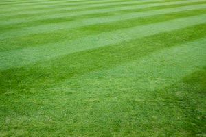 Take Your Lawn to a Different Level: DIY Baseball Field Stripes